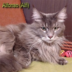 Alfonso of Fluffy-Bouncyball
