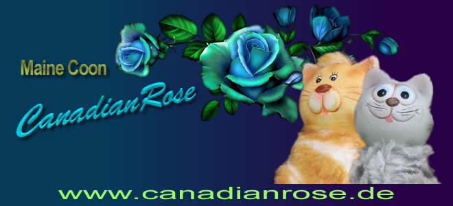 CanadianRose Maine Coon